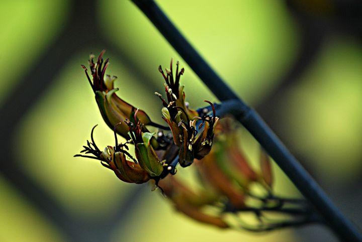 Growing Green - Zyra