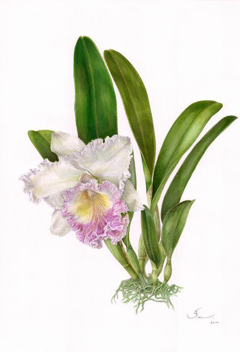 Orchid Cattleya Madame Edith Bongo - RATTIKORN