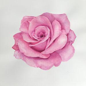 Opera Rose