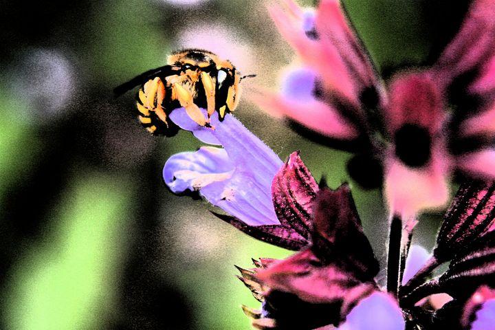 Bee and Flower - Alan Harman Photography