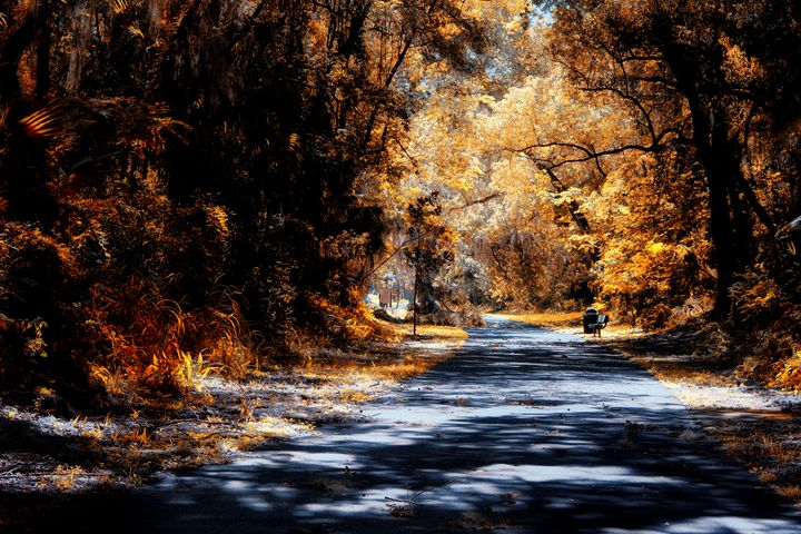 trail - Harold Jones