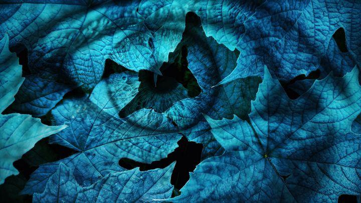 Leaf eye - Harold Jones