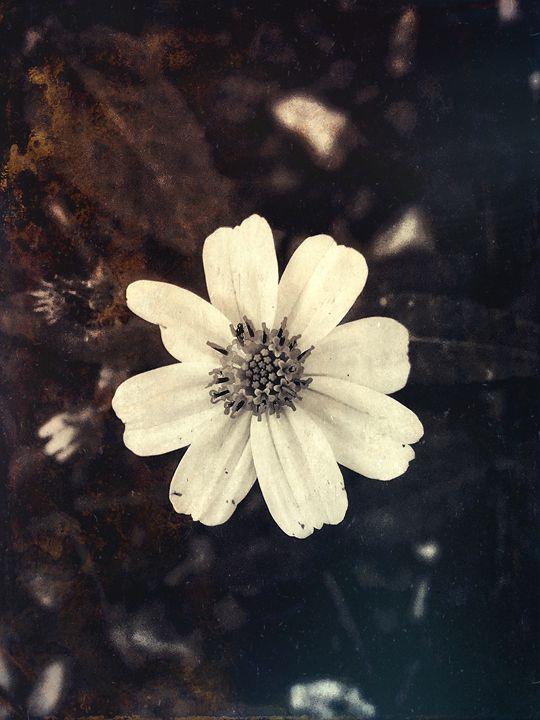 Flower - Harold Jones