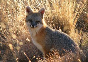 Fox N' Frawns