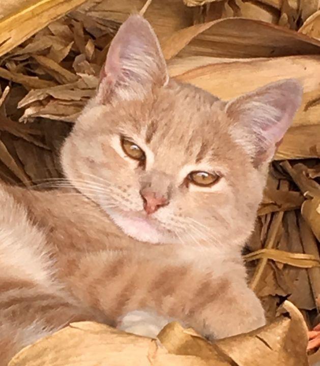 Shane the barn cat - Deborah Daniel