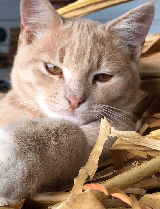Laid back cat - Deborah Daniel