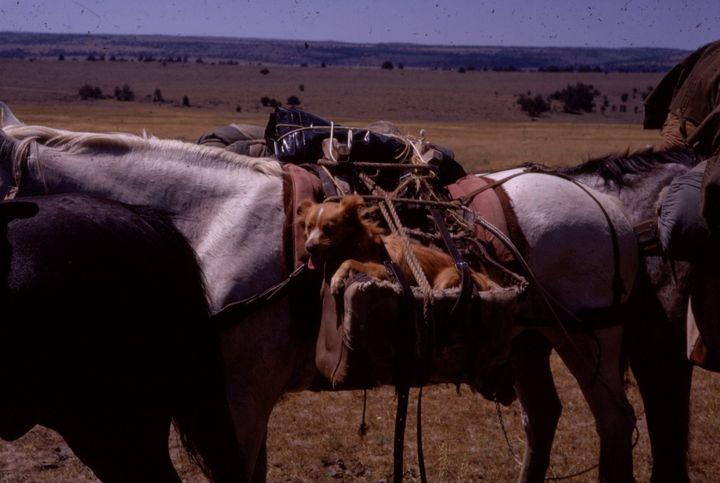 5345 Penny on horseback - Pruitt Gallery