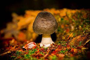 Little mushroom