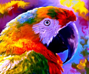 Macaw Eagle