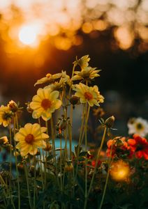 flowers at sunet