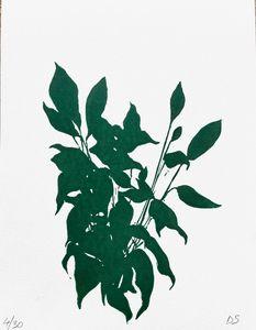 House plant, Silhouette, Shadows
