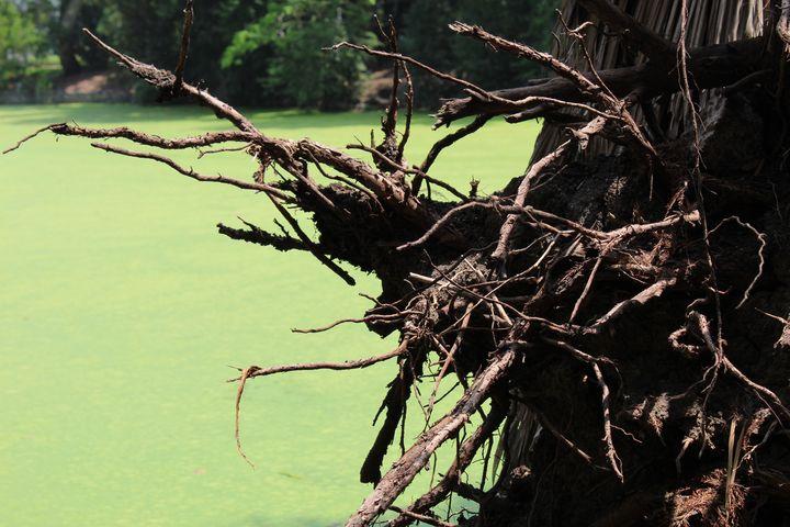 Root Streams - Brian Edwards Gallery