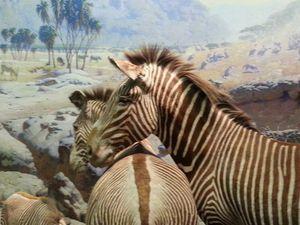 Zebra Love - Brian Edward Gallery