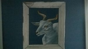 Goat Albino - Eira Barbara