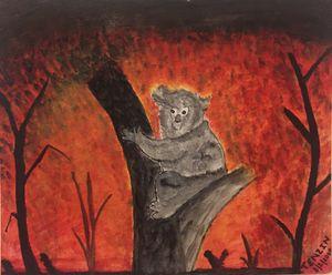 Save Koala