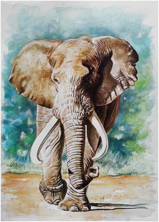 Elephant 1 - Wag