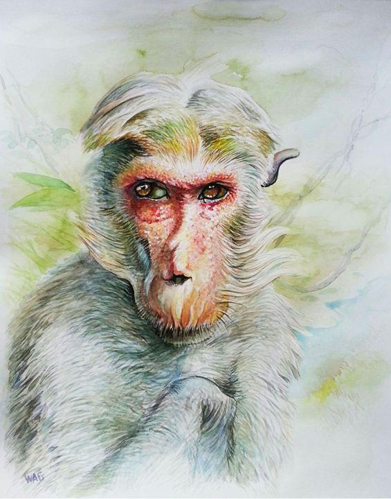 Monkey 6 - Wag