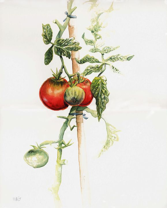 Tomatoes 1 - Wag