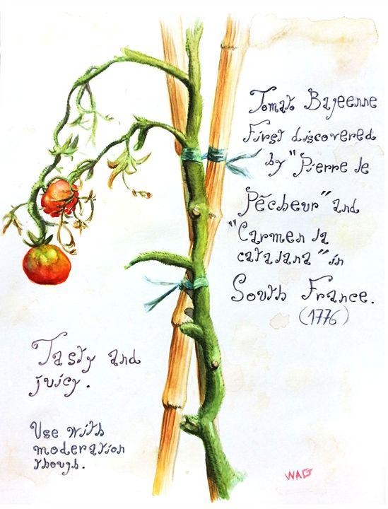 Tomatoes 2 - Wag