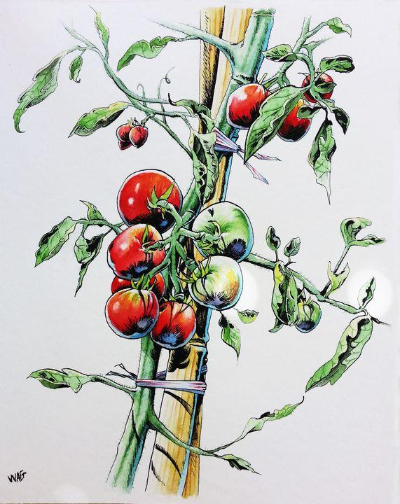 Tomatoes 3 - Wag