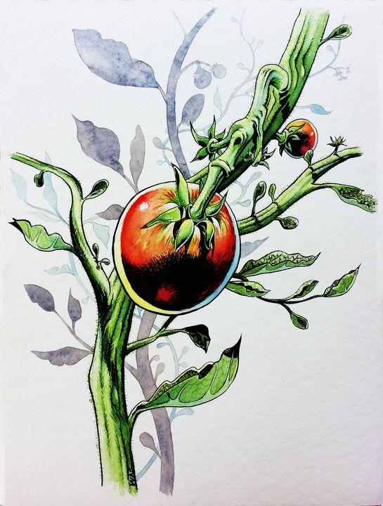 Tomatoes 4 - Wag