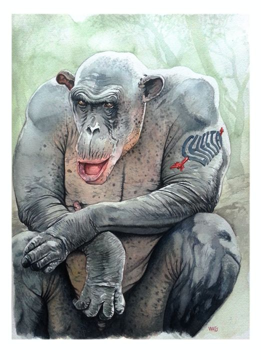Monkey 5 - Wag