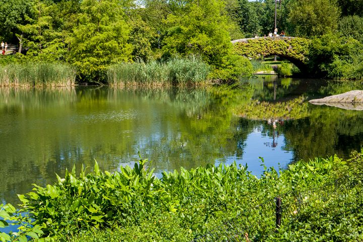 Central Park Pond - debchePhotography