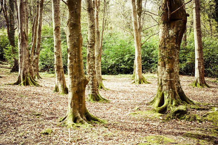 In The Woods - debchePhotography