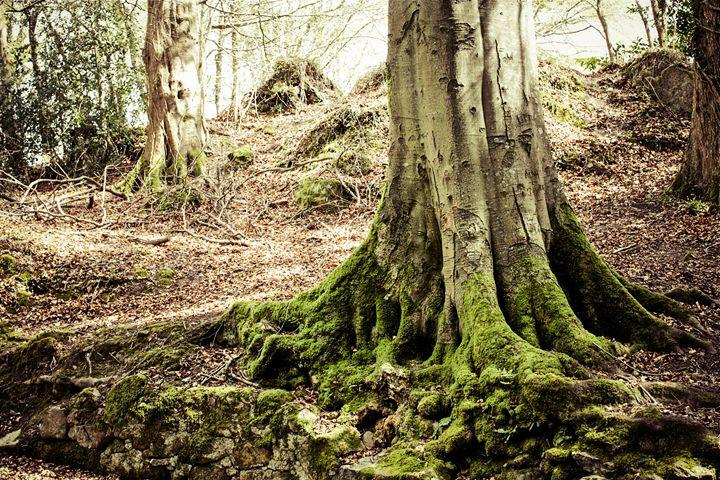 Tree Trunk - debchePhotography