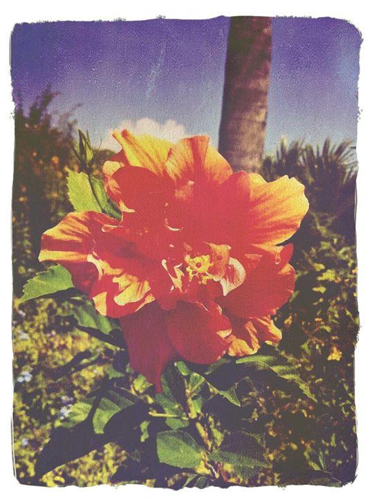 Florida Flower - Lady B Originals