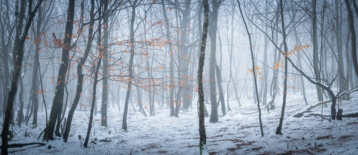 Frozen forest - Martin Galea photography