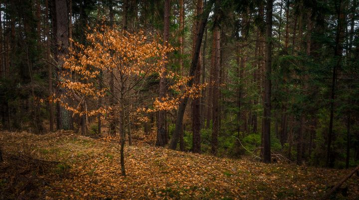 Lost tree - Martin Galea photography