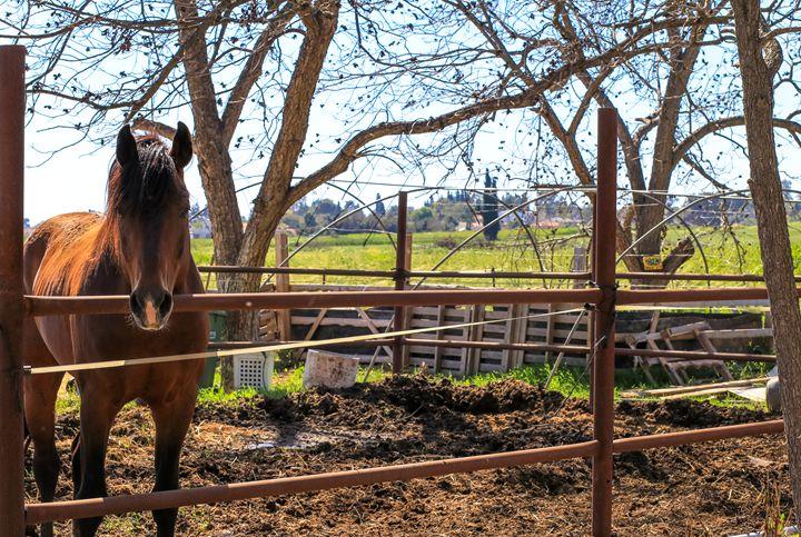 A beautiful brown horse behind a fen - gal shoval mashiach