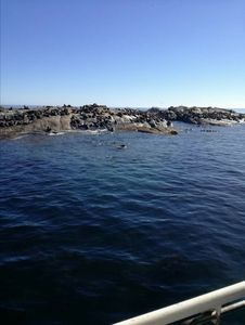 Seal island, Hout Bay