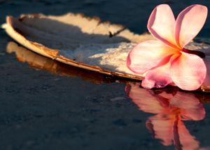 Plumeria Boat Reflection