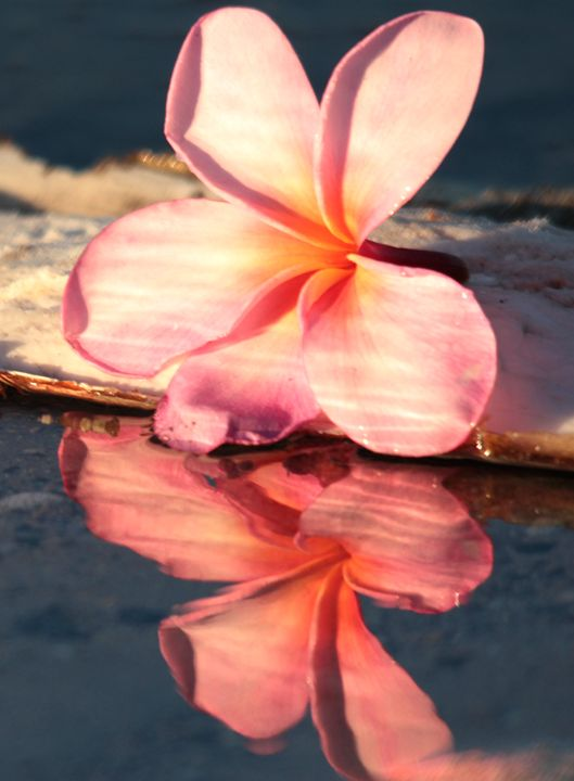 Plumeria Reflection - Olivia Ohlen