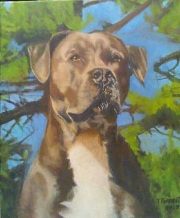 American Pit Bull Terrier. - Terry Forrest Fine Art