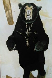 Black Bear in the Okefenokee Swamp