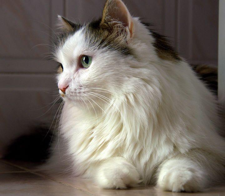 A cat. - Martina Mincheva fine art