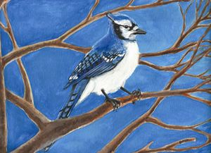 Blue Jay - Prints from Creation Creatures