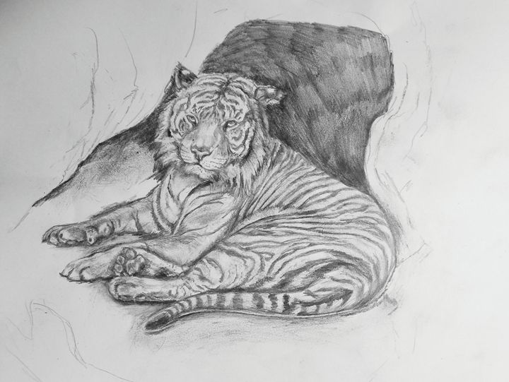 Tiger Study in Pencil - Prints from Creation Creatures
