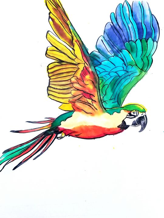 Bright Flight - Prints from Creation Creatures