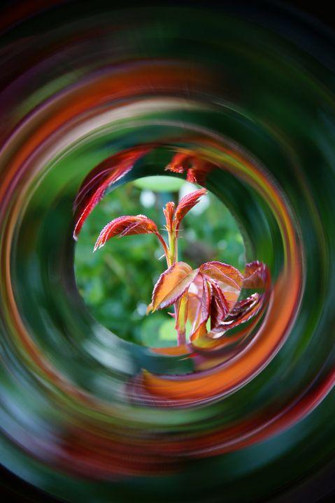 birth of rose - reflectionsArts
