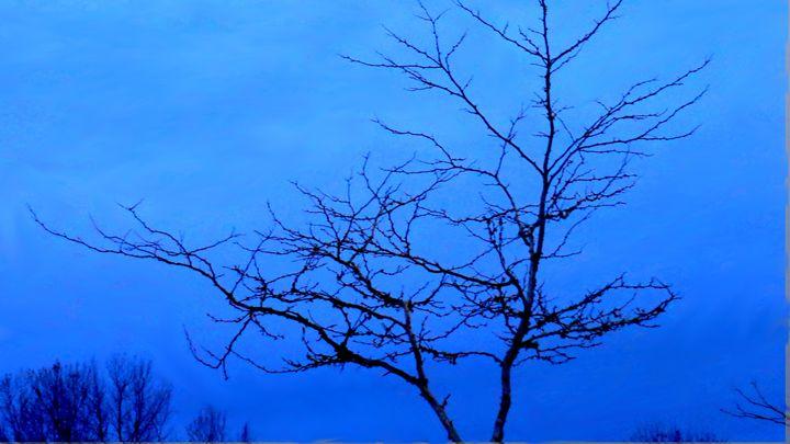 Tree at Twilight - Fiona