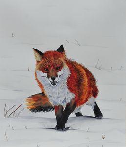 The Fox in Winter