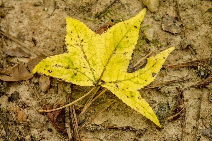The Yellow Leaf - Thomas Vasas Photography & Art