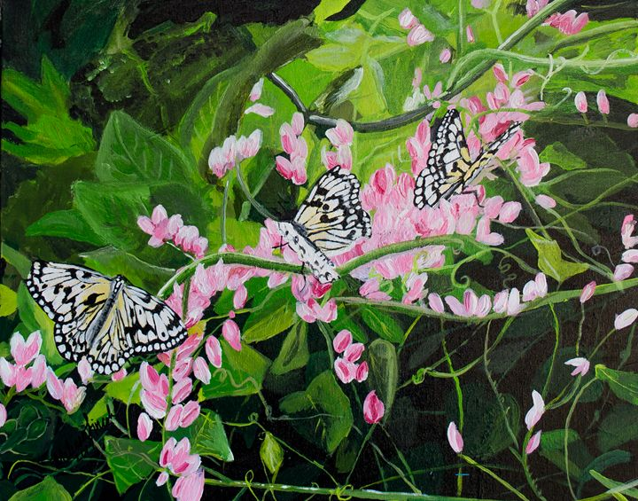 Butterflies, Butterfly Pavilion - MKDL Paintings and More