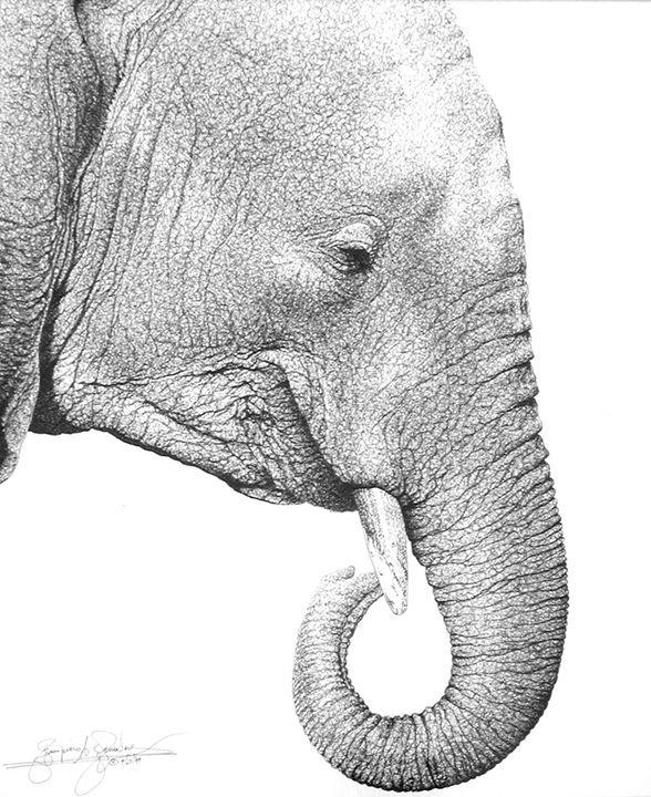 African elephant - AMRAA