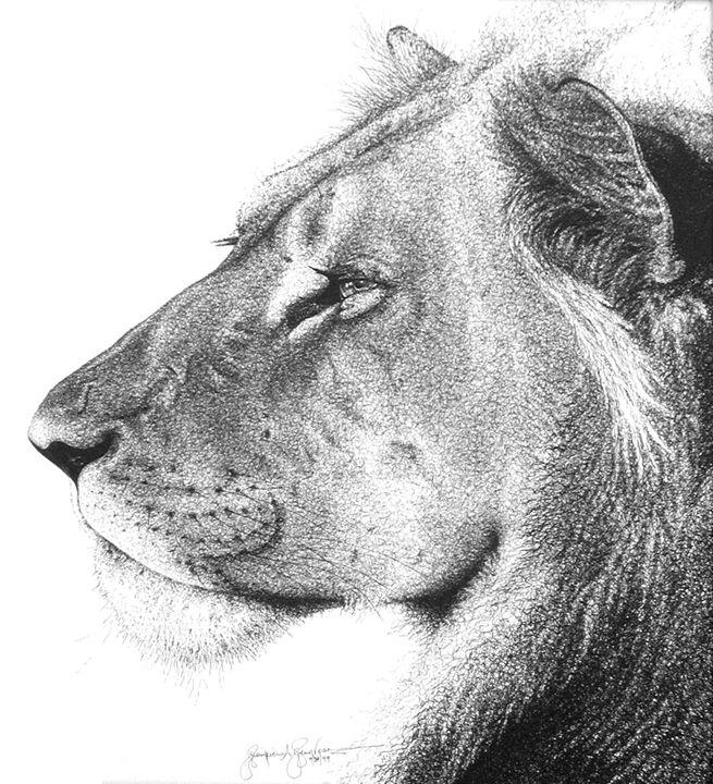 African lion - AMRAA
