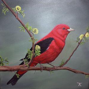 Scarlet Tanager - yukitkat art/ kathleen Y Parr